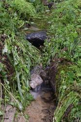 Flowing river over rocks, moss, ferns and grass, natural landscape