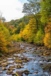 Flowing water at Red Creek river vertical view near Dolly Sods, West Virginia with colorful autumn fall yellow orange tree foliage at Canaan valley Appalachian mountains