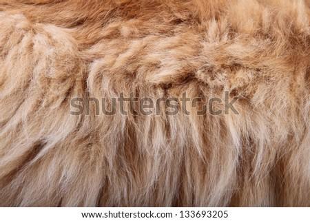 fluffy animal fur texture