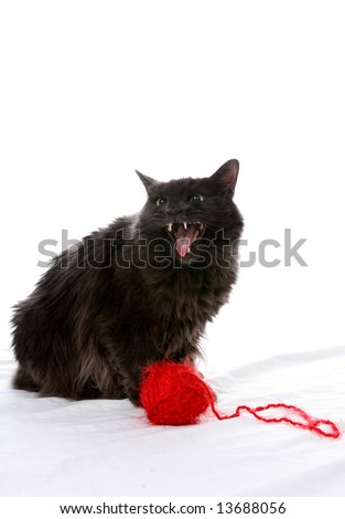 Fluffy black cat with mouth open next to a ball of yarn.  Cat looks evil.