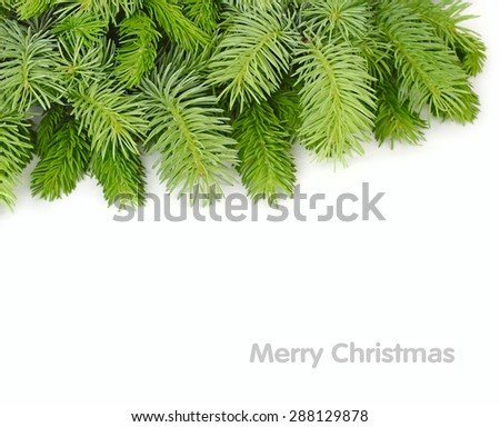 Fluffy branches of a Christmas tree on a white background. A Christmas background with a place for the text. Top view.