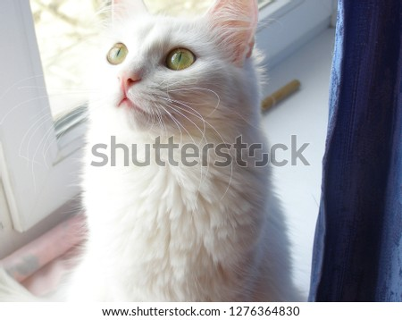 fluffy cat cats #1276364830
