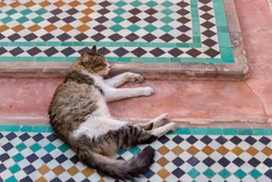 Fluffy cat sleeping on colourful tiles of the Saadian tombs in Marrakech, Morocco