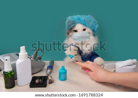 fluffy cat works as a manicurist at home Stok fotoğraf ©