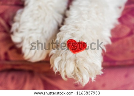 Fluffy dog with red heart shape #1165837933