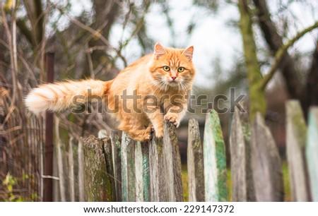 cat scented litter