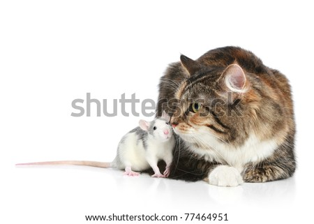 Fluffy mixed-breed cat and rat on a white background