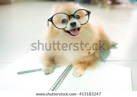 stock photo fluffy pomeranian dog with a smiling face wear glasses 453183247 - Каталог — Фотообои «Животные»
