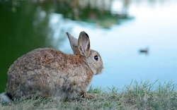 Fluffy rabbit looking into the distance