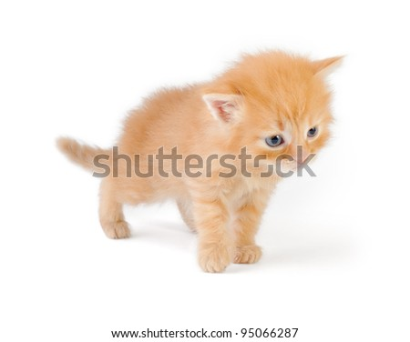 fluffy red kitten of one month, isolated on white - stock photo