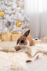fluffy red lop-eared rabbit sits on a soft rug against the background of a Christmas tree in a beautifully decorated room for Christmas. New year's gift. greeting card, place for copy space for text