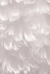 Fluffy snowy white bird feather animal texture background - shallow depth of field and soft focus - portrait layout