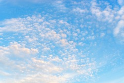 Fluffy translucent cirrocumulus clouds high in a blue sky. Tranquil skyscape on a sunny day as a background. Many small white clouds float slowly high in the azure sky. Weather forecast. Full frame.