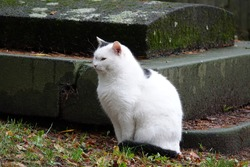 Fluffy White Cat with Black Patches Sitting in the Grass Next to a Mossy Tombstone on a Damp Autumn Day in a Cemetery Prague, Czechia