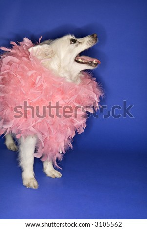 stock photo fluffy white dog wearing pink feather boa 3105562 Little Red Riding Hood Costume Adult Plus Size ...