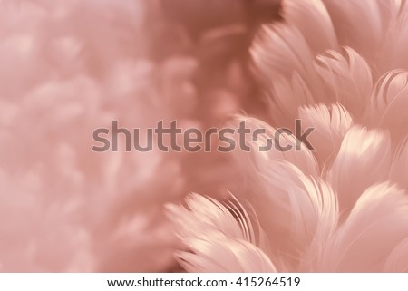 Fluffy white feathers on purplish austerity brown soft focused photograph - Fashion Color Trends Fall Winter 2016 - 2017 - Woman wear collection - Set 1