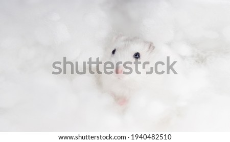 fluffy white hamster among white clouds Stock photo ©
