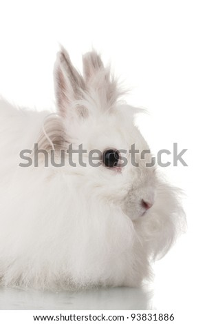 Fluffy white rabbit isolated on white