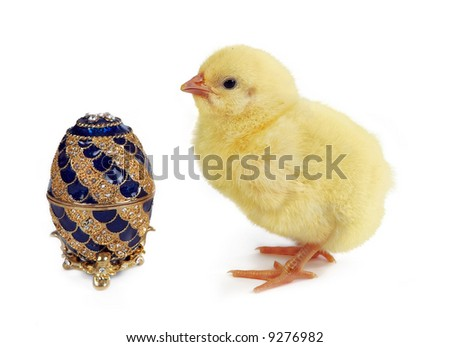 Fluffy yellow easter chick looking at a golden jewelry egg