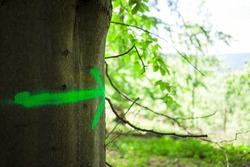Fluorescent green arrow sign painted od tree trunk. Scavenger hunt game. Nature way finding concept. Woodlands playground ecology background with copy space
