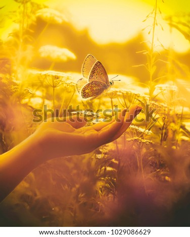 Fluttering butterfly and hand in grass at sunset macro with soft focus. Butterfly in nature on a meadow in the spring summer in sun in gold shades.