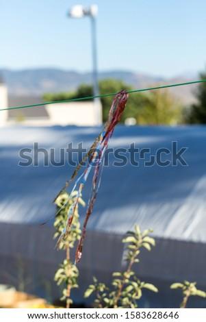 Fluttering robbins to deter birds coming into garden Stock fotó ©