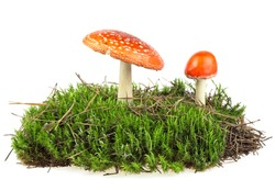 Fly agaric mushrooms on green moss isolated over white background