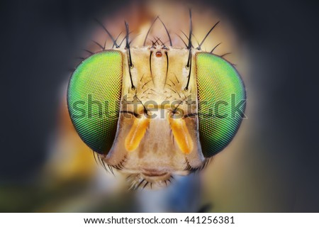 fly eye nature micro portrait sharp detail