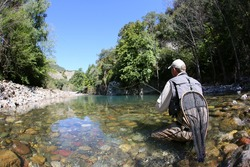 Fly fisherman fishing trouts in freshwater river
