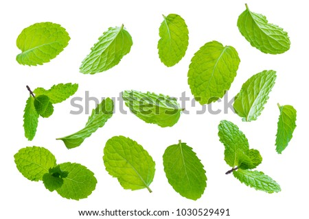 Fly fresh raw mint leaves isolated on white background #1030529491
