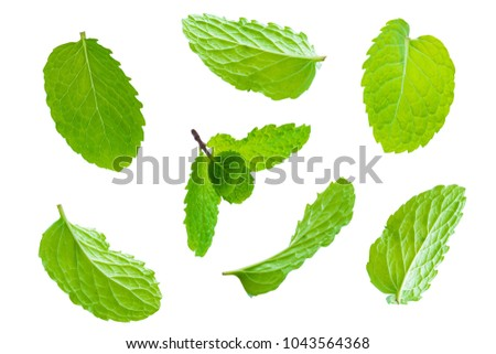 Fly fresh raw mint leaves isolated on white background #1043564368