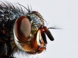 fly head macro