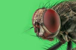 fly head stack macro shot