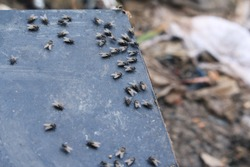 Fly insect in the waste landfill site