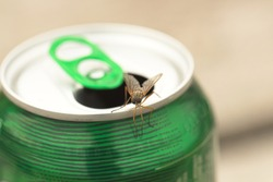 Fly Insect sitting on Beer Can
