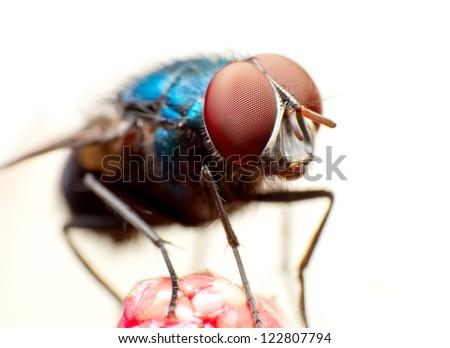 Fly macro #122807794