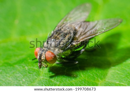 fly on a green leaves