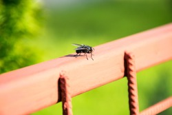 Fly on the fence.