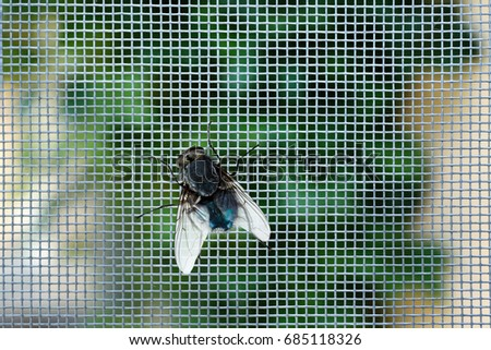 Fly on window screen, closeup #685118326