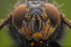Fly portrait with face details