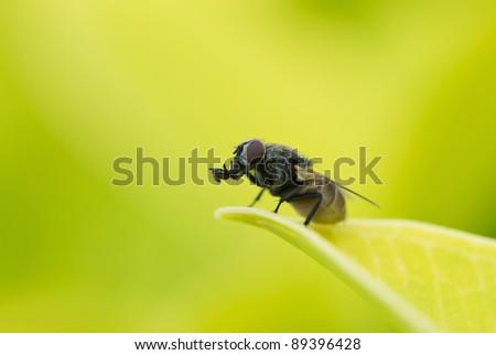 fly sitting on green leaf