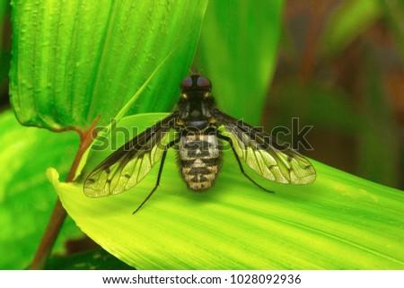 Fly , Unidentified , Aarey Milk Colony , INDIA