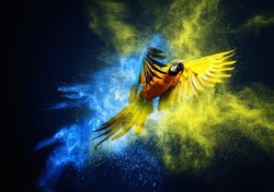 Flying Ara parrot over colourful powder explosion