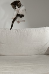 flying baby cat over white pad