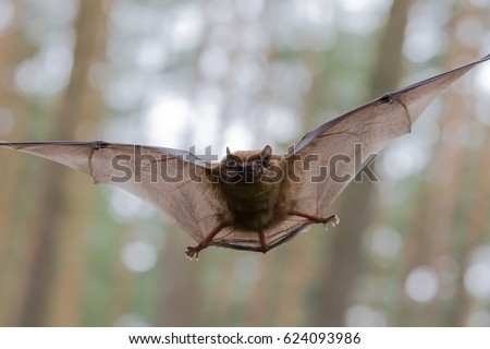 Flying Bat in Forest