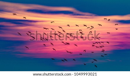 flying bird above the sunset  #1049993021