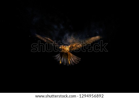 Flying bird. Bird of prey. Dispersion, splatter effect. Black background.  #1294956892