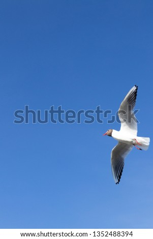 Flying bird, gull #1352488394