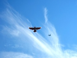 Flying bird in the sky and a plane in the background. A combination of a real photo with clipart