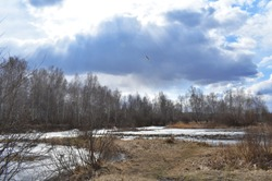 flying bird in the sun against the cloudy sky forest small frozen pond spring time
